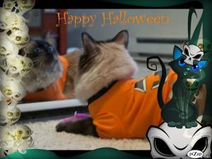 Ichiro says Happy Halloween