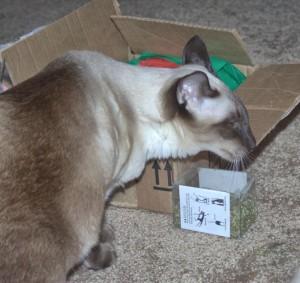 CHey loves her box