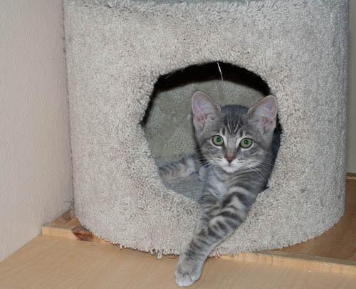 Stretching Kitten