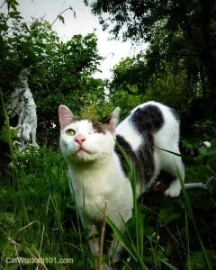 cat-odin-garden-0011