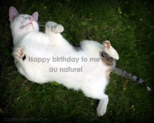 odin-cat-funny-birthday