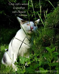 odin-cat-garden-001