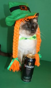 st-patricks-day-cute-cat-photo-mao