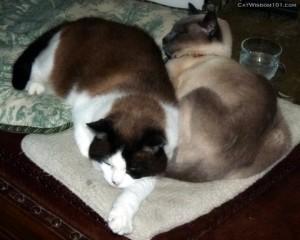 cat-wisdom-101-cats