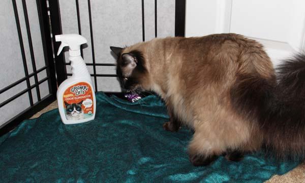 Wellness Natural Cat Food Ingredients