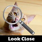 LookClose