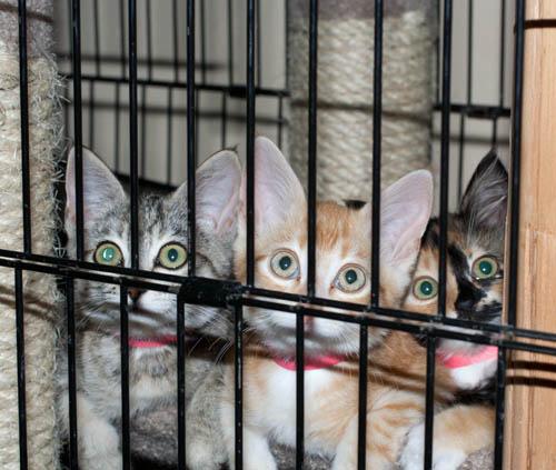 Shelter Kittens II